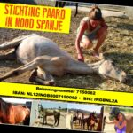 Paard in Nood Spanje