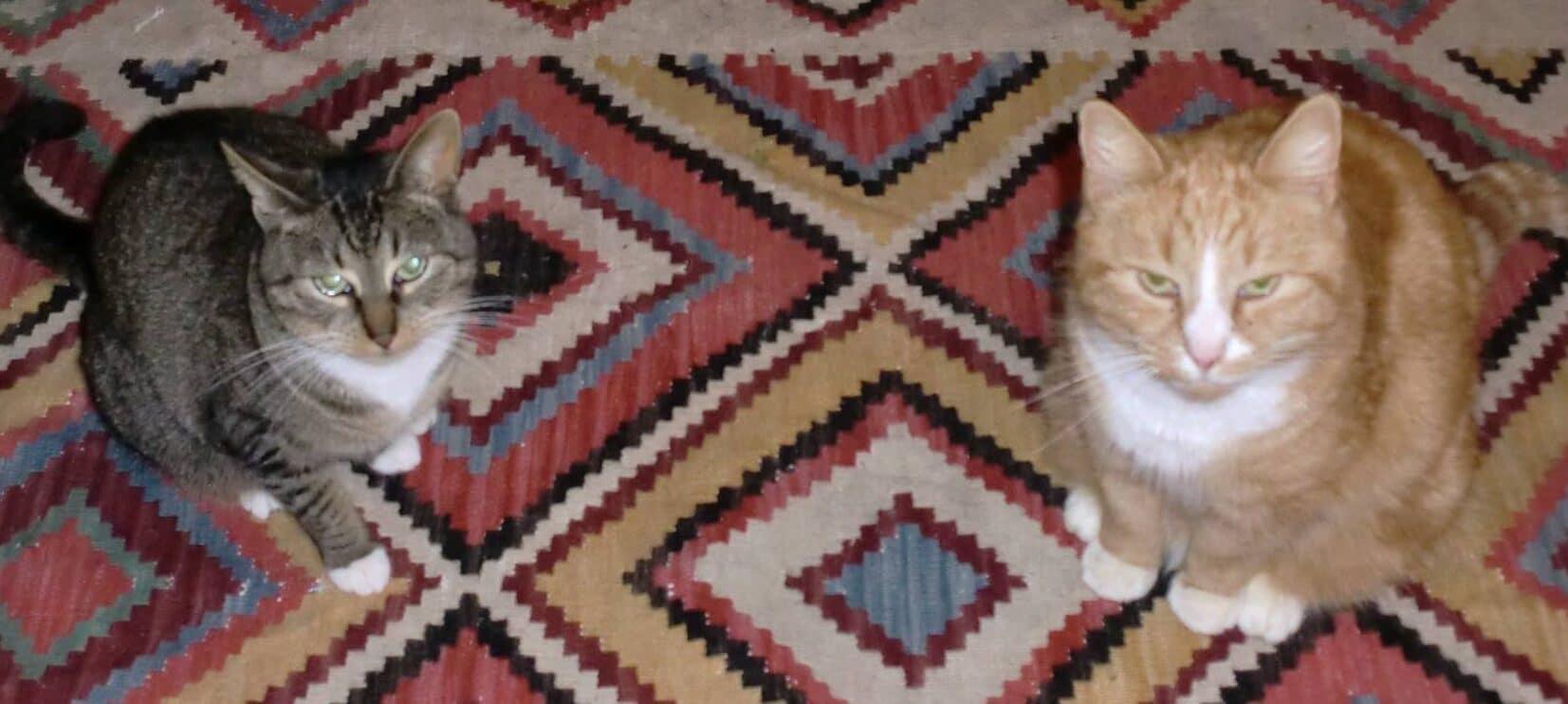 Sweetie en Bengel